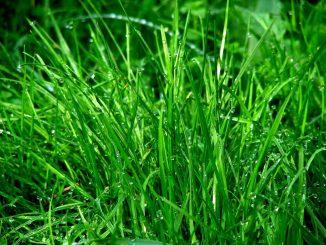Lebensmittelmotten dauerhaft loswerden alltagstipp - Ameisen garten loswerden ...
