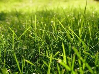 Nach dem Winter sehen die meisten Grünflächen mitgenommen aus. - Foto: pixabay.com/imaginaryhuman/CCO