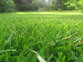 Im Frühjahr: Raus mit dem Vertikutierer - Foto: pixabay.com/Nickel/CCO