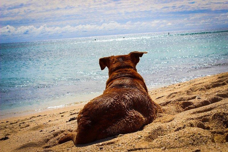 Für Haustiere die mit auf Reise gehen kann allerdings von Entspannung keine Rede sein - die Vierbeiner empfinden vor allem die Anreise als puren Stress. - Foto: pixabay.com/CatherineT/CCO