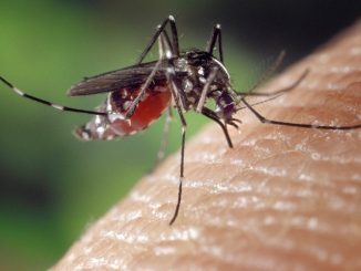 Mücken fühlen sich vor allem an ruhigen und stehenden Gewässern besonders wohl. - Foto: pixabay.com/FotoshopTofs/CCO