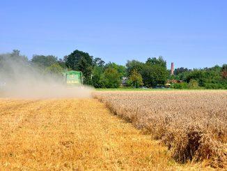 Dank des hohen Nährstoffgehaltes und weiteren positiven gesundheitlichen Eigenschaften erlebt Amaranth derzeit einen wahren Aufschwung. - Foto: quaknet.de
