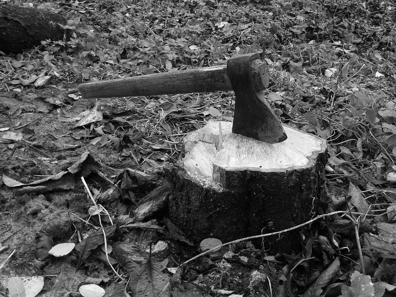 Das Fällen eines Baumes ist auf den ersten Blick keine komplizierte Sache. - Foto. pixabay.com/Pavlofox/CCO