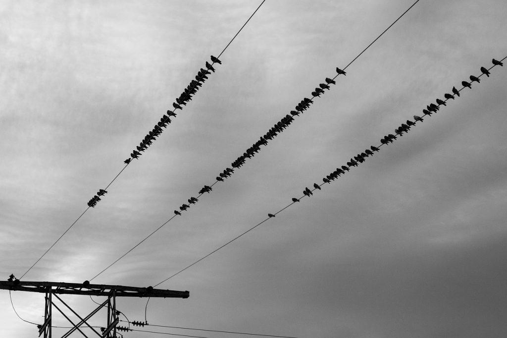 Bei vielen Stromanbietern ist es von Bedeutung, ob der Umzug innerhalb oder außerhalb des eigenen Netzgebietes stattfindet.