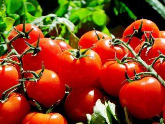 Stehen die Tomaten im Freien, ist eine gegen Tomaten-Krankheiten resistente Sorte zu bevorzugen. - Foto: pixabay.com/Couleur/CCO
