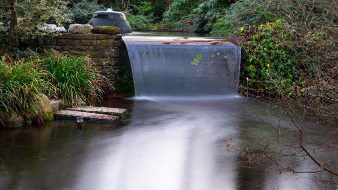 Die Pflanzenarten der Wasserpest haben ein großes Spektrum der Farbenvielfalt von hell- bis dunkelgrünen sowie auch braunen Farbtönen. - Foto: pixabay.com/Didgeman/CCO