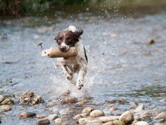 Hundehalter sind an zusätzlichen Haarwuchs auf der Kleidung gewöhnt. Während des Fellwechsels wird es aber doch oft zu viel. - Foto: pixabay.com/howo/CCO