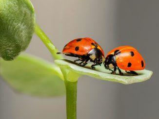Um unliebsamen Hausbesuch durch Insekten fernzuhalten, gibt es verschiedene Fliegengitter. - Foto: pixabay.com/RonBerg/CCO