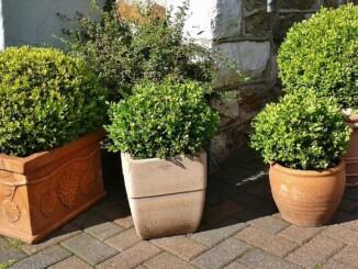Auf pflanzkuebel-direkt.de gibt es tolle Angebote für hochwertige Pflanztröge, -schalen, Blumenkübel, Raumteiler sowie Kunstpflanzen für Garten, Wohnhaus und Gewerbe. - Foto: pixabay.com/cocoparisienne/CCO